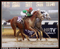Visionaire wins the G3 Gotham Stakes (Rock and Racehorses) Tags: horses horse ny newyork rain fog march track mud racing aqueduct gotham prep thoroughbred thoroughbreds sloppy visionaire kentuckyderby matz racehorses michaelmatz teamvalor