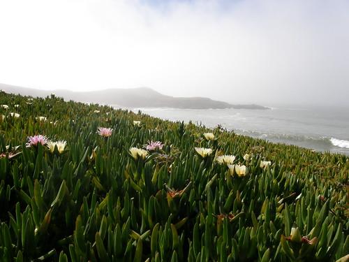 Flowers and Ocean