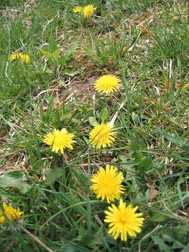 地上有可愛小花兒~