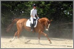 Wotan et Laurianne (Didier-Lg) Tags: horse cheval rider laurianne horseriding chevaux dressage equitation wotan horsesandriders chevauxetcavaliers