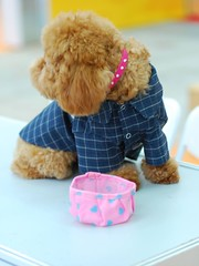 Toy Poodle (Horizon616) Tags: shenzhen ckc nikkor50mmf14d nilkon