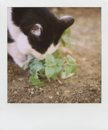 rocky + catnip, part 1 - the discovery
