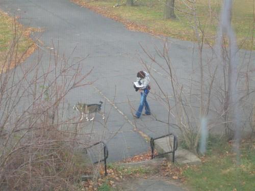 Dog walker strolling through