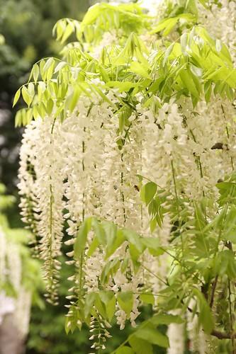 Ashikaga Flower Park 02
