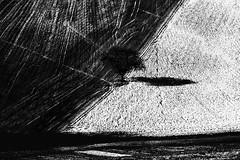 //_/?/_// (Effe.Effe) Tags: bw italy signs tree monochrome countryside hill bn campagna soil rows sillon terra albero marche colline furrows segni solchi aratura marcheshire