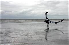 Man with wings | Man met vleugels (Dit is Suzanne) Tags: 30092007 duitsland germany германия borkum боркум ©ditissuzanne canondigitalrebel img2582 strand beach пляж mensen people люди surfer views2900