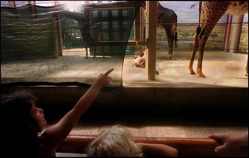 national zoo, 1998