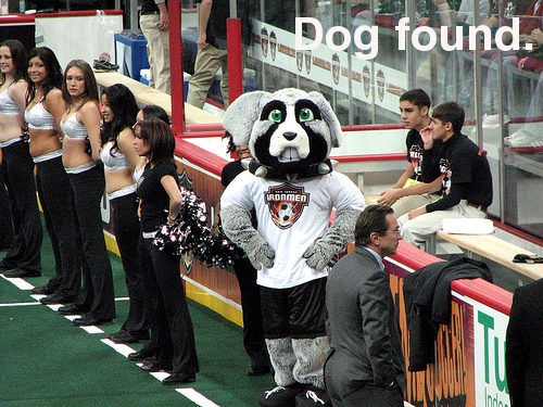 Metro Dog image for The Offside Rules
