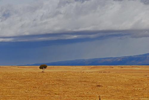 árbol soledad o una tormenta está viniendo...¿cuál?