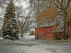 Weeping Willow (newagecrap) Tags: wisconsin rural barns farms blueribbonwinner kenoshacounty golddragon abigfave