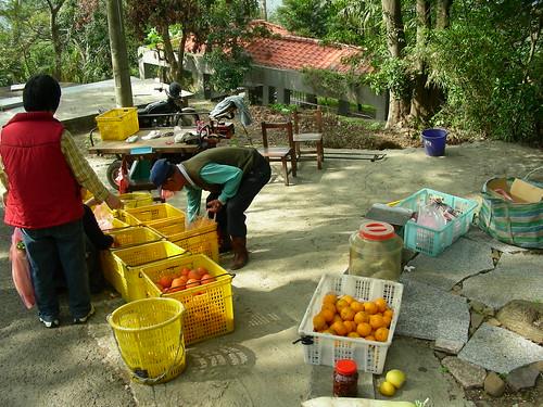 Orange fruit venor on Fei Feng Mountain