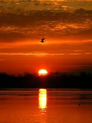 Sunrise- lone bird (Edzone) Tags: trees orange reflection bird water clouds sunrise dawn fly reflect marshland newday abigfave avision