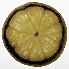 Orange texture (Ciro Boro - photo) Tags: orange macro texture fruit backlight plexy