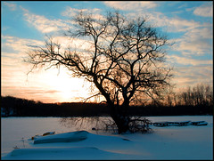 Sunrise (GR58) Tags: winter sun lake snow tree sunrise michigan grandrapids topic abigfave avision aplusphoto
