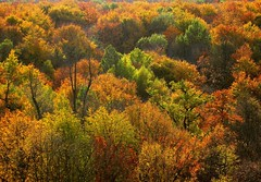 autumn-in-thuringia (**MIKA**) Tags: canon canopy favs beech own indiansummer biodiversity g7 hainich my baumkronenpfad avision powershotg7 canonpowershotg7 mikahuettner