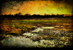 43% Burnt: Calculating Infinity (ryanfarney) Tags: nature field silhouette canon puddle golden rocks raw tn farm rows hdr intensity 3exp calculatinginfinity ryanfarney