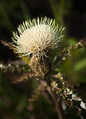 Brays Bayou reservoir - Thistle
