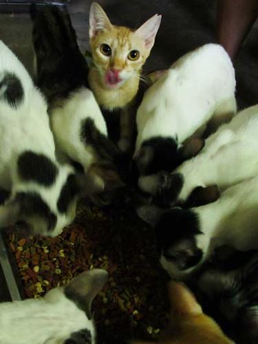Beth's 29 cats
