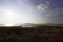 Flowers in san teodoro (fabio barbera) Tags: flowers sunset sea nuvole mare none sicily isles sicilia trapani favignana marsala egadi isole tramonte