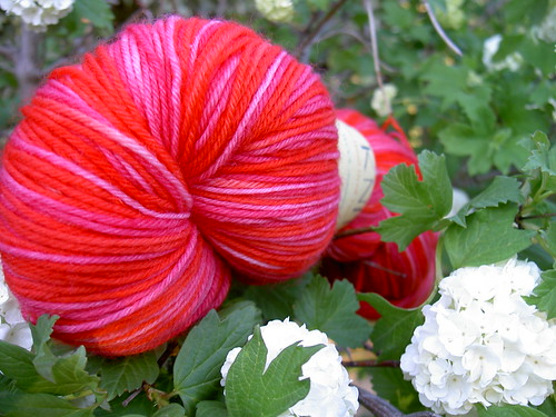 Strange looking rosy flower