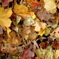 Autumn leafs (experimien) Tags: autumn leafs gtaggroup