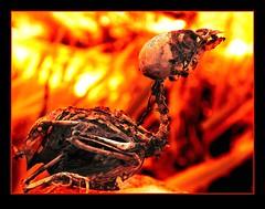 The Infernal Pigeon (Count Rushmore) Tags: nature gardens garden dead skeleton photography nikon belgium pigeon hell hasselt natuur rushmore corps coolpix tuin count flanders infernal flandres 4500 stevoort duif vlaanderen dode skelet natuurfotografie countrushmore duifisdood