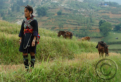 Black Hmong, Sapa, Vietnam (NaPix -- (Time out)) Tags: black asian asia farming na mothers vietnam sapa hmong nam blackhmong minorities riceharvest hmoob ricefarming minoritytribes hmongwoman blackhmongsapavietnam nampix
