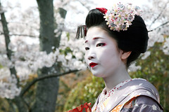 N A O K A Z U : Sakura (mboogiedown) Tags: travel people cute girl beauty japan cherry asian japanese kyoto asia traditional blossoms culture maiko geiko geisha kawaii sakura kansai kanzashi oshiro kamishichiken hanakanzashi mywinners naokazu goldstaraward