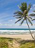 Path to the Blue Sea (Jeff Clow) Tags: ocean sea tree beach sand palm barbados caribbean serene bathsheba naturesfinest diamondclassphotographer excellentphotographersaward ©jeffrclow