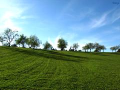 Marmilla (Stranju) Tags: sardegna verde green grass sardinia erba sole supergrass isola prati marmilla supergreen stranju
