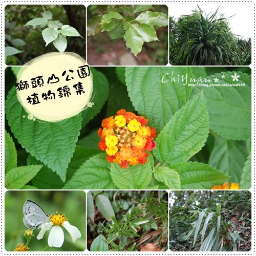 【遊記】探險金采風07獅頭山公園植物錦集