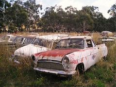 'Snowys Ute' (datsuncog) Tags: australia snowymountains wreckersyard junkyard scrapyard decay wrecks deadcars rust abandonedcars fordconsulmk2ute