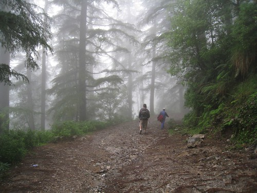 Walking through the misty pine forest above McLeod Ganj