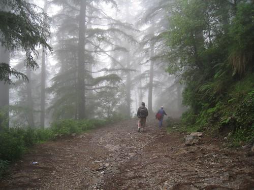 Walking through the misty pine forest above McLeod Ganj