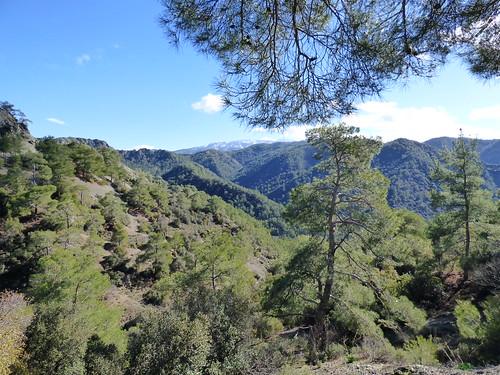 Troodos, en route to Kykkos Monastery (12)