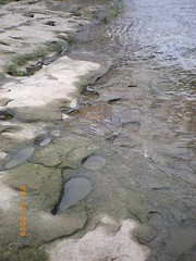 smooth rocks in river bed