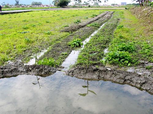 ilid的田-水池初建