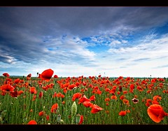 Pipacsmez (Botond Horvth) Tags: travel blue red summer sky cloud flower color green nature beauty field yellow season landscape spring nice interesting nikon hungary may sigma dry explore fotos poppy april 1020mm viva con espritu pipacs ble cokin amapola d90 botond horvth nikond90 vosplusbellesphotos estilonaturaleza