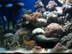 P9203371 (shayoctave) Tags: sea fish tan shay