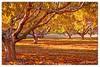 Shades of Autumn (Joe Barrett Photography) Tags: autumn color tree fall nature leaves d50 newjersey nikon topc50 nj vivid nikkor 1855mmf3556g southjersey flickrchallengegroup theperfectphotographer happinessconservancy