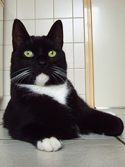 The house cat (regtur) Tags: house netherlands dutch cat kat nederland huis dier poes frits medion
