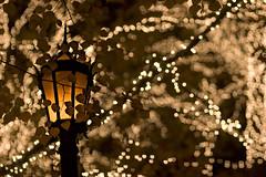 (your pal Matt) Tags: thanksgiving nyc newyorkcity autumn newyork love centralpark manhattan romance upperwestside romantic gothamist curbed woodyallen tavernonthegreen cpw centralparkwest 112107
