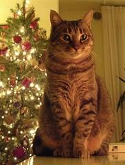 Maggie Christmas