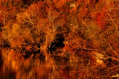 Harkening Back to Fall ( D L Ennis) Tags: autumn trees fall forest reflections blueridgemountains jamesriver abigfave anawesomeshot dlennis onlythebestare harkeningbacktofall
