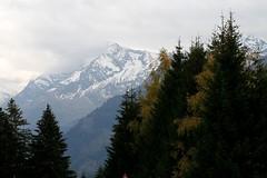 Austrian Alphs