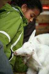 But this baby goat prefers zipper... (koe2moe) Tags: girl sweet zipper babygoat 2008 givemefive ilovegreen xgivemefive xgivefive gettingfed