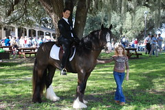 Lyla San and Mylee (The Pelton Vanners Gypsy Vanner Horses) Tags: gypsy vanner