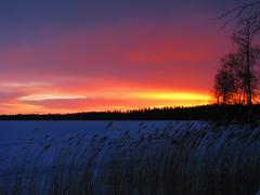 Stormy evening (Vaeltaja) Tags: blue winter sunset red sky lake snow nature yellow suomi finland reeds scenery view february oulu lumi talvi maisema luonto auringonlasku sininen punainen naturesfinest taivas keltainen kuivasjrvi supershot helmikuu aplusphoto diamondclassphotographer ysplix brillianteyejewel rytit