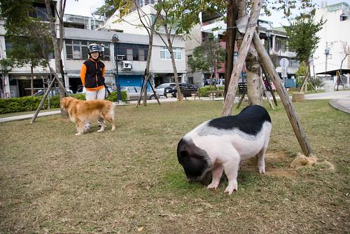 [桃園]這次不帶狗了……雙人同遊大溪