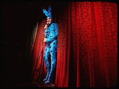 The Bunny's Back in Town (Linus Gelber) Tags: nyc newyork rabbit bunny costume manhattan lowereastside performance curtains rabbitears burlesque bunnysuit redvelvet slipperroom sigma1020mm bluebunny scottythebluebunny scottybunny